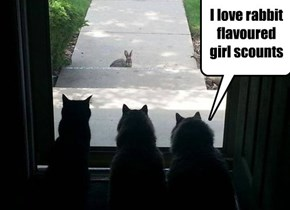 I love rabbit flavoured girl scounts