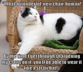 """""""What a wonderful, new chair, human!  By the time I get through sharpening my claws on it, you'll be able to wear it like a straw hat!"""""""