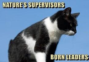 NATURE'S SUPERVISORS  BORN LEADERS
