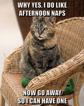 WHY YES, I DO LIKE                                 AFTERNOON NAPS  NOW GO AWAY                                 SO I CAN HAVE ONE
