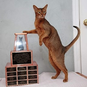 See This Trophy, I Won This. It's Mine
