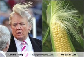 Donald Trump Totally Looks Like this ear of corn