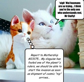 Cosmic nip and stellar mouse toys