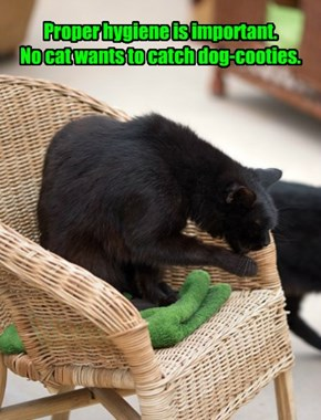 Proper hygiene is important. No cat wants to catch dog-cooties.