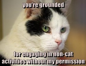 you're grounded  for engaging in non-cat activities without my permission