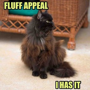 FLUFF APPEAL