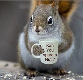 Nutz to You? No, Nutz to ME!