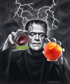 Frankenstein of the Day: Artist-Created Tree Bears 40 Different Kinds of Fruit