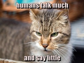 humans talk much  and say little