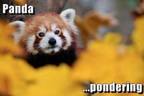 Panda  ...pondering