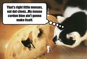 That's right little meeses, eat dat cheez...My mouse cordon blue ain't gonna make itself.