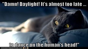 """""""Damn! Daylight! It's almost too late ...  to dance on the human's head!"""""""