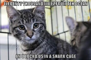 ELEBENTY THOUSAND MILEZ FRUM TEH OCEAN  AN U LOCKD US IN A SHARK CAGE