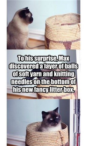 To his surprise, Max discovered a layer of balls of soft yarn and knitting needles on the bottom of his new fancy litter box.