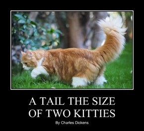 A TAIL THE SIZE  OF TWO KITTIES