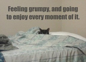 Feeling grumpy, and going to enjoy every moment of it.