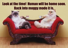 Look at the time!  Human will be home soon. Back into moggy mode it is.