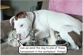 Can we send the dog to one of those 'harassment in the workplace' things?
