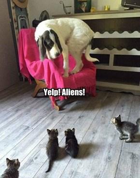 Yelp! Aliens!