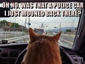 OH NO, WAS THAT A POLICE CAR I JUST MOONED BACK THERE?