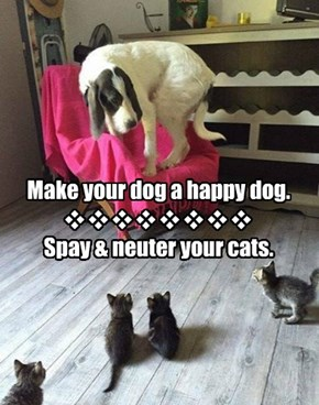 Make your dog a happy dog.  Spay & neuter your cats.