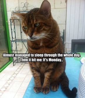 Almost managed to sleep through the whole day.  Then it hit me: It's Monday...