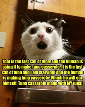 That is the last can of tuna, and the human is using it to make tuna casserole. It is the last can of tuna and I am starving! And the human is making tuna casserole. Which he will eat himself. Tuna casserole made with MY tuna!