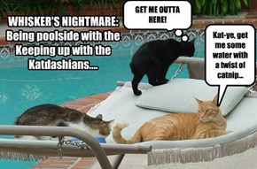WHISKER'S NIGHTMARE: Being poolside with the Keeping up with the Katdashians....