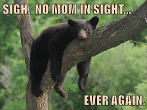 SIGH.  NO MOM IN SIGHT...  EVER AGAIN.