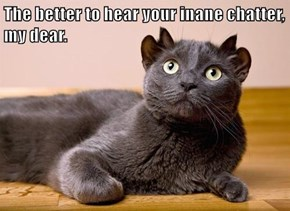 The better to hear your inane chatter, my dear.