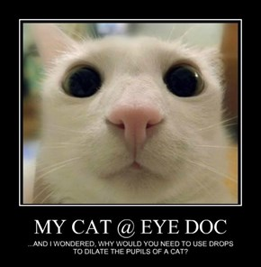MY CAT @ EYE DOC