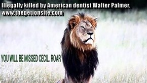 Illegally killed by American dentist Walter Palmer. www.thepetionsite.com