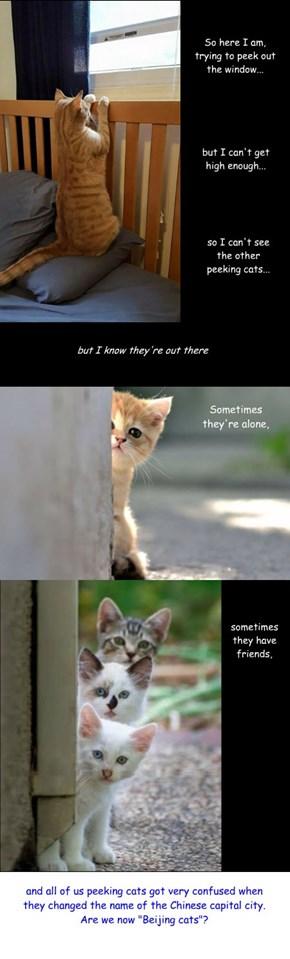 "Caption this: ""peeking cats"""