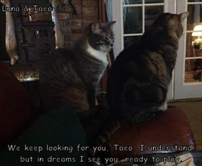 Luna & Taeo   We keep looking for you, Taeo. I understand, but in dreams I see you, ready to play.