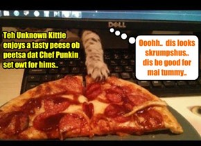 Teh Unknown Kittie delites in a wunnerful meal..