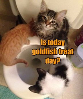 Is today  goldfish treat day?