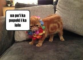 Kitty speaks Hawaiian!