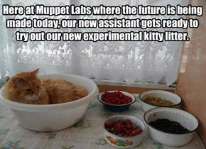 Here at Muppet Labs where the future is being made today, our new assistant gets ready to try out our new experimental kitty litter.