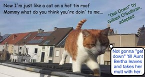 """Rooftop Kitty"" (""Get Down"" by Gilbert O'Sullivan, adapted)"