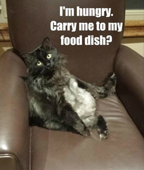 I'm hungry. Carry me to my food dish?