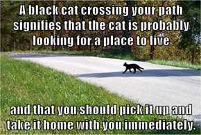 A black cat crossing your path signifies that the cat is probably looking for a place to live  and that you should pick it up and take it home with you immediately.