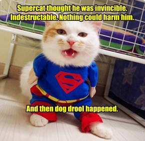 Supercat thought he was invincible. Indestructable. Nothing could harm him.          And then dog drool happened.