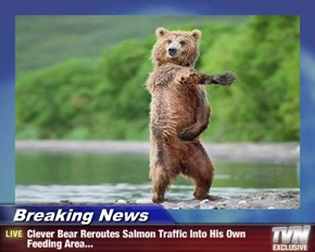 Breaking News - Clever Bear Reroutes Salmon Traffic Into His Own Feeding Area...