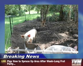 Breaking News - Pigs Vow to Spruce Up Area After Week-Long Frat Party...