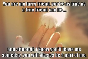 You are my furry friend, you're as true as a true friend can be ...   and although I know you'll leave me someday, you will always be a part of me.