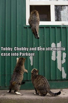 Tubby, Chubby and Ben attempt to ease into Parkour.