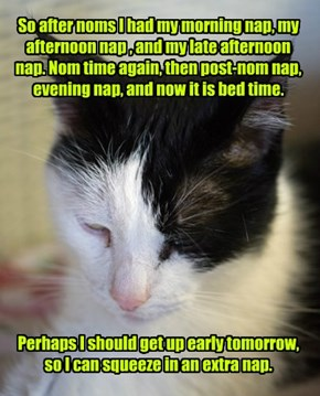 So after noms I had my morning nap, my afternoon nap , and my late afternoon nap. Nom time again, then post-nom nap, evening nap, and now it is bed time.            Perhaps I should get up early tomorrow, so I can squeeze in an extra nap.