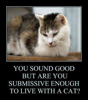 YOU SOUND GOOD  BUT ARE YOU   SUBMISSIVE ENOUGH  TO LIVE WITH A CAT?