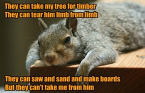 Overly-attached squirrel blues