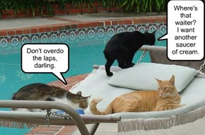 Exercising at the pool, kitteh style.